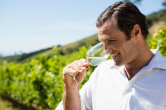 Vintner smelling glass of wine Stock Photo