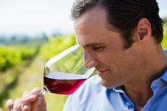 Vintner smelling glass of wine Royalty Free Stock Photos