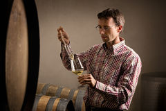 Vintner taking sample of white wine in cellar. Winemaker in cellar taking sample of white wine from barrel for wine tasting Royalty Free Stock Photography