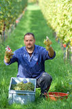Vintner in the vineyard Stock Photo
