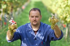 Vintner in the vineyard Stock Photos