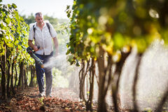 Vintner spraying chemicals on his vines Stock Photography