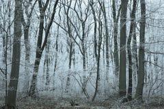Vintrig frostad skog Arkivbilder
