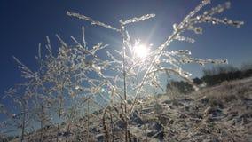 Vintrig sol Arkivfoto