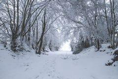 Vintrigt landskap med snö arkivfoton