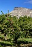 Vinvingårdar i Coloradoflodendalen arkivbilder