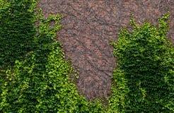 Viny τούβλα Στοκ Φωτογραφία