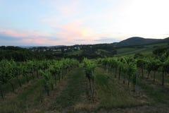 Vinyard à la colline de Kahlenberg dans la capitale Vienne d'Austrias Photos libres de droits