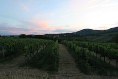 Vinyard à la colline de Kahlenberg dans la capitale Vienne d'Austrias Photo stock