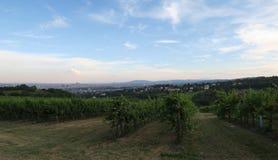 Vinyard à la colline de Kahlenberg dans la capitale Vienne d'Austrias Image stock