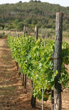 Vinyard Stock Photography