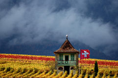 山vinyard 免版税图库摄影