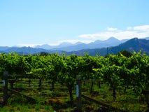 Vinyard com montanhas, Nova Zelândia Imagem de Stock Royalty Free