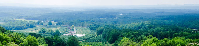 Vinyard in a distance of  virginia mountains Stock Photos