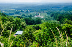 Vinyard in a distance of  virginia mountains Royalty Free Stock Images