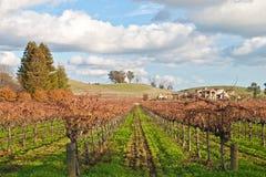 Vinyard en wijnmakerij Royalty-vrije Stock Afbeelding