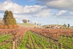 Vinyard en wijnmakerij Royalty-vrije Stock Fotografie