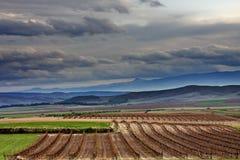 Vinyard et nuages Image libre de droits