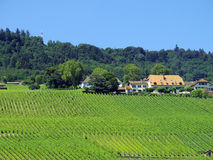 Vinyard farm argicultural in Italy, view from road side Royalty Free Stock Photos