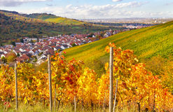 Vinyard in germany Stock Images