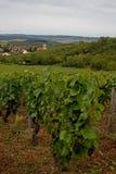 Vinyard at Irancy, Burgundy, France Stock Image