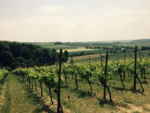 Vinyard in Limburg, the Netherlands Royalty Free Stock Photography