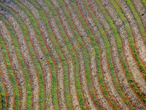 Vinyard lines Stock Photography