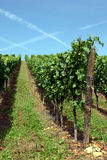 Vinyard in Luxembourg Royalty Free Stock Photography