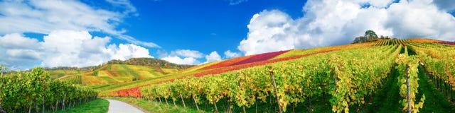 Vinyards panorama. Vineyards panorama in autumn close to Stuttgart Royalty Free Stock Photos