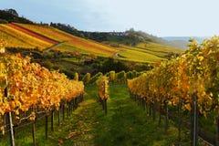Vinyard panorama Royalty Free Stock Images