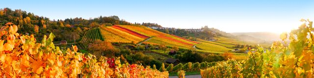 Vinyards panorama. Vineyards panorama in autumn close to Stuttgart Stock Images