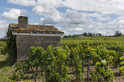 Vinyard at Saint Emilion with House Stock Photography