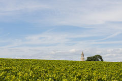 Vinyard with tower  Roque Stock Photography