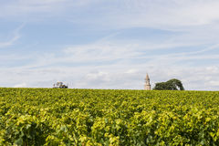 Vinyard with tower and tractor Roque Stock Photos