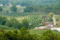 Vinyard in una distanza delle montagne della Virginia Fotografie Stock Libere da Diritti
