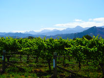 Vinyard z górami, Nowa Zelandia Obraz Royalty Free