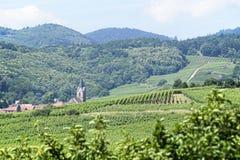 Vinyards αγροτική Γαλλία στοκ εικόνες
