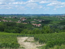 Vinyards av Barbaresco Royaltyfri Bild