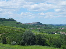 Vinyards av Barbaresco Royaltyfria Foton