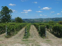 Vinyards av Barbaresco Royaltyfria Bilder