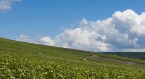 Tincourt Vineyards Campagne. Vinyards in the Champagne district near Epernay, France Stock Photo