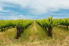 Vinyards fonctionnant au-dessus des collines dans l'Australie du sud image stock
