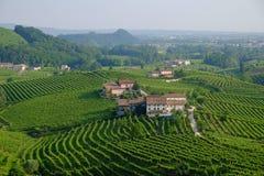 Vineyards near Santo Stefano, Valdobbiadene Stock Photography
