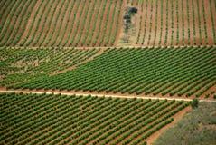 Vinyards w losie angeles Rioja, Hiszpania Zdjęcia Royalty Free