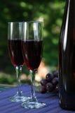 vinyardswine royaltyfri bild