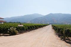 Vinyeard nel Cile Fotografia Stock