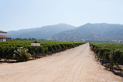 Vinyeard no Chile Foto de Stock