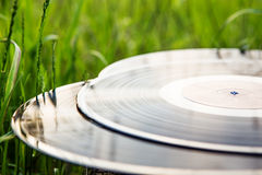 Vinyl record in the green grass Stock Photo