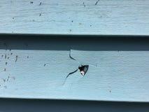 Vinyl Siding Damaged and Cracked Stock Photo