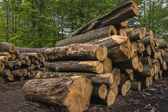 Vio los registros, árboles, serrería, madera de construcción Imagen de archivo libre de regalías
